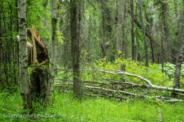 Downed trees to be removed from forest.