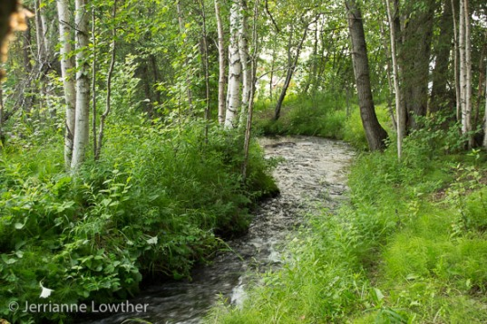 Below the beaver dam, Chester Creek courses through a lush landscape...