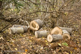 Short logs for firewood remove excess fuel from forest for fire safety.