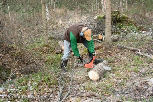 Dean Kalbfleisch cuts logs into firewood lengths with chainsaw.