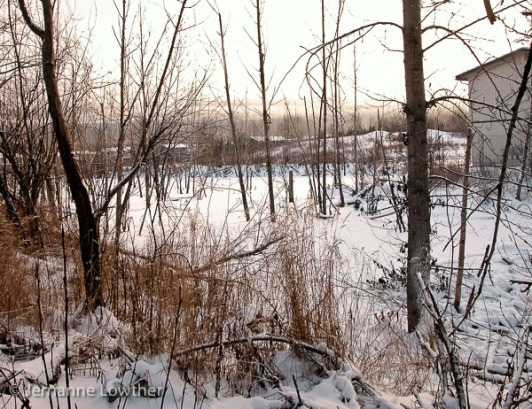 Beaver dam backs up a sizeable pond, which freezes over in winter. Salmon make it through the dam into the pond.